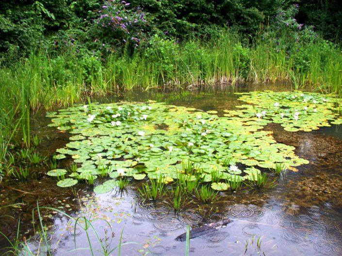 The Garden Design Factory Pond